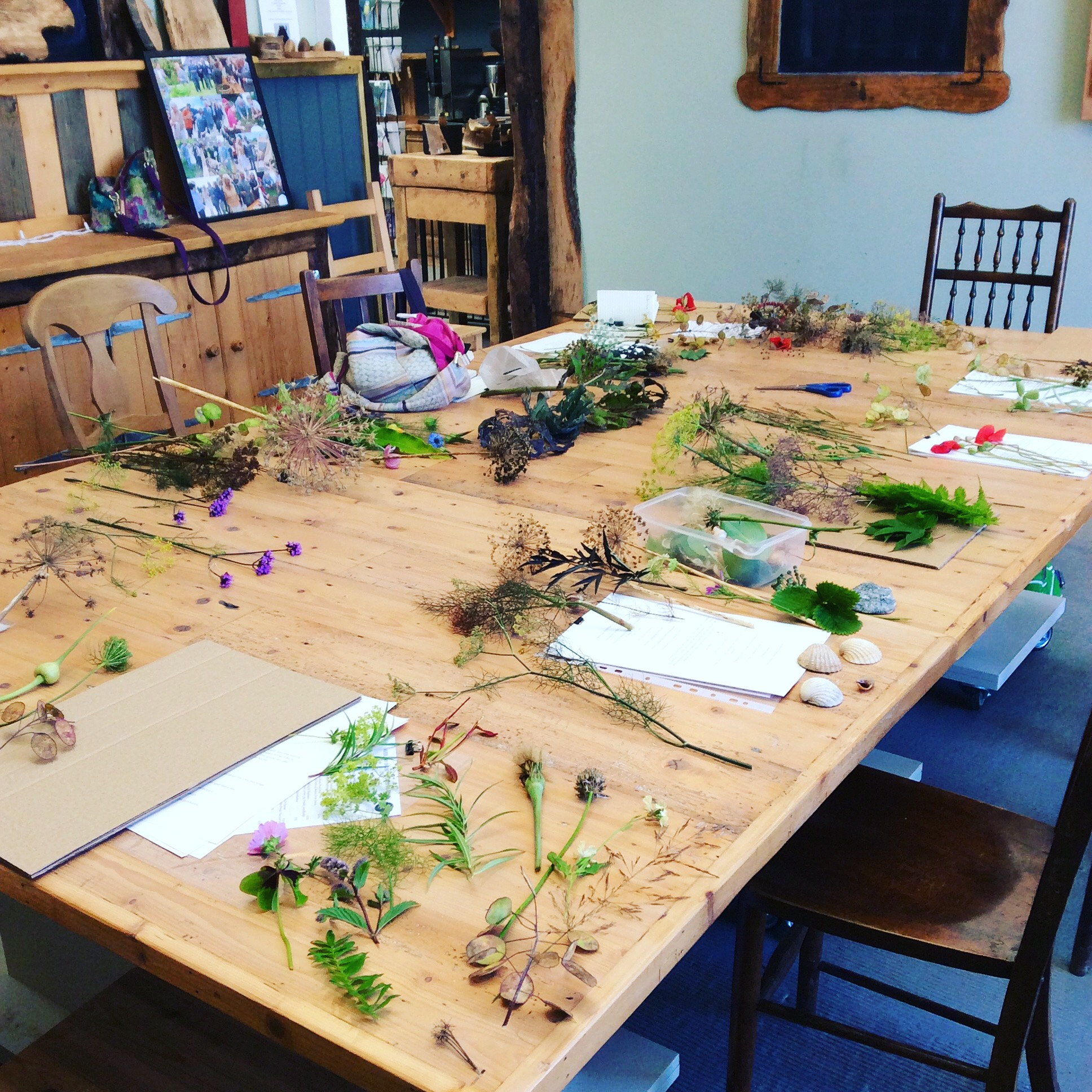 Table with foraged plants, ready for printmaking.