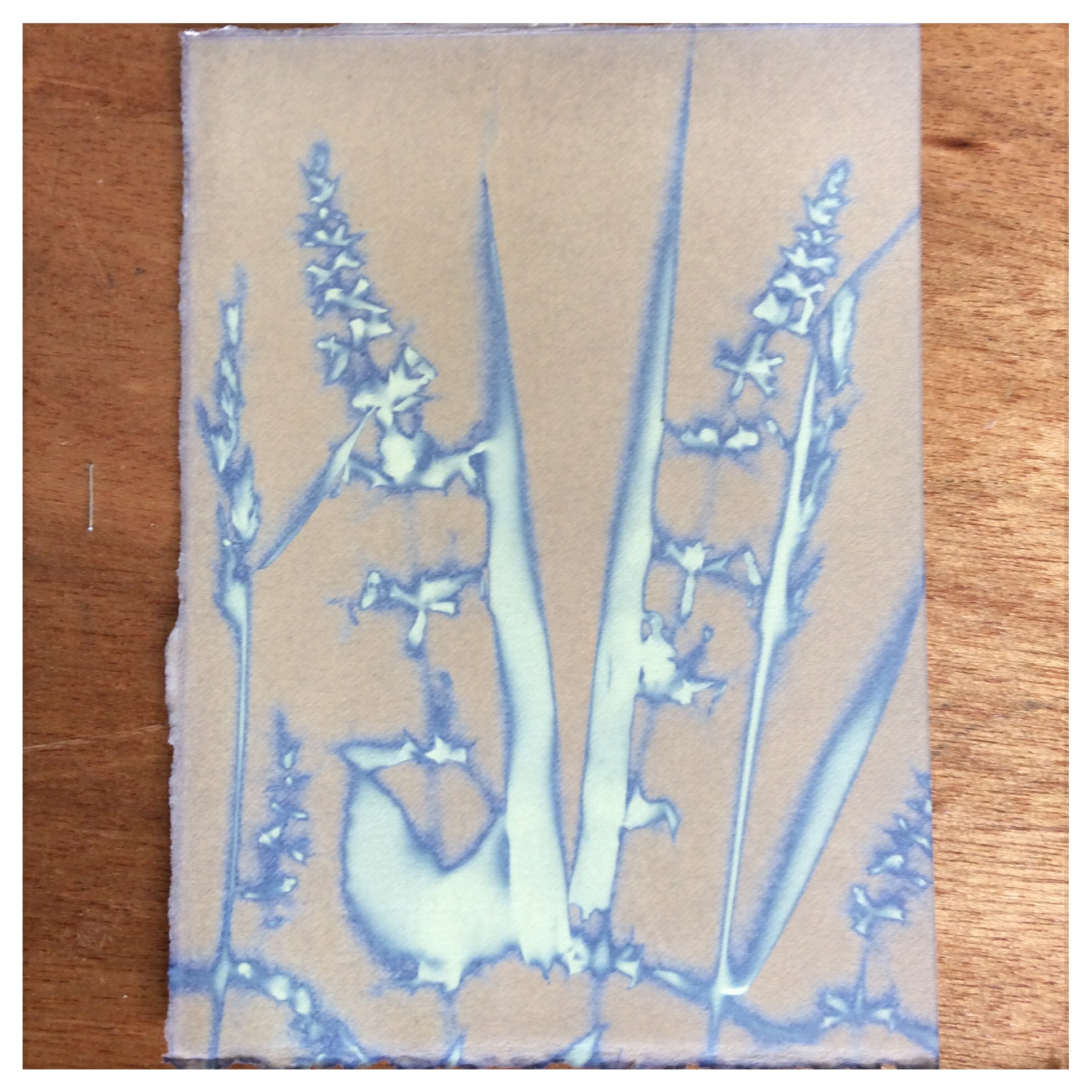 Delicate, Victorian influenced Blueprint, just prior to washing. Student work from Humble by Nature, July.