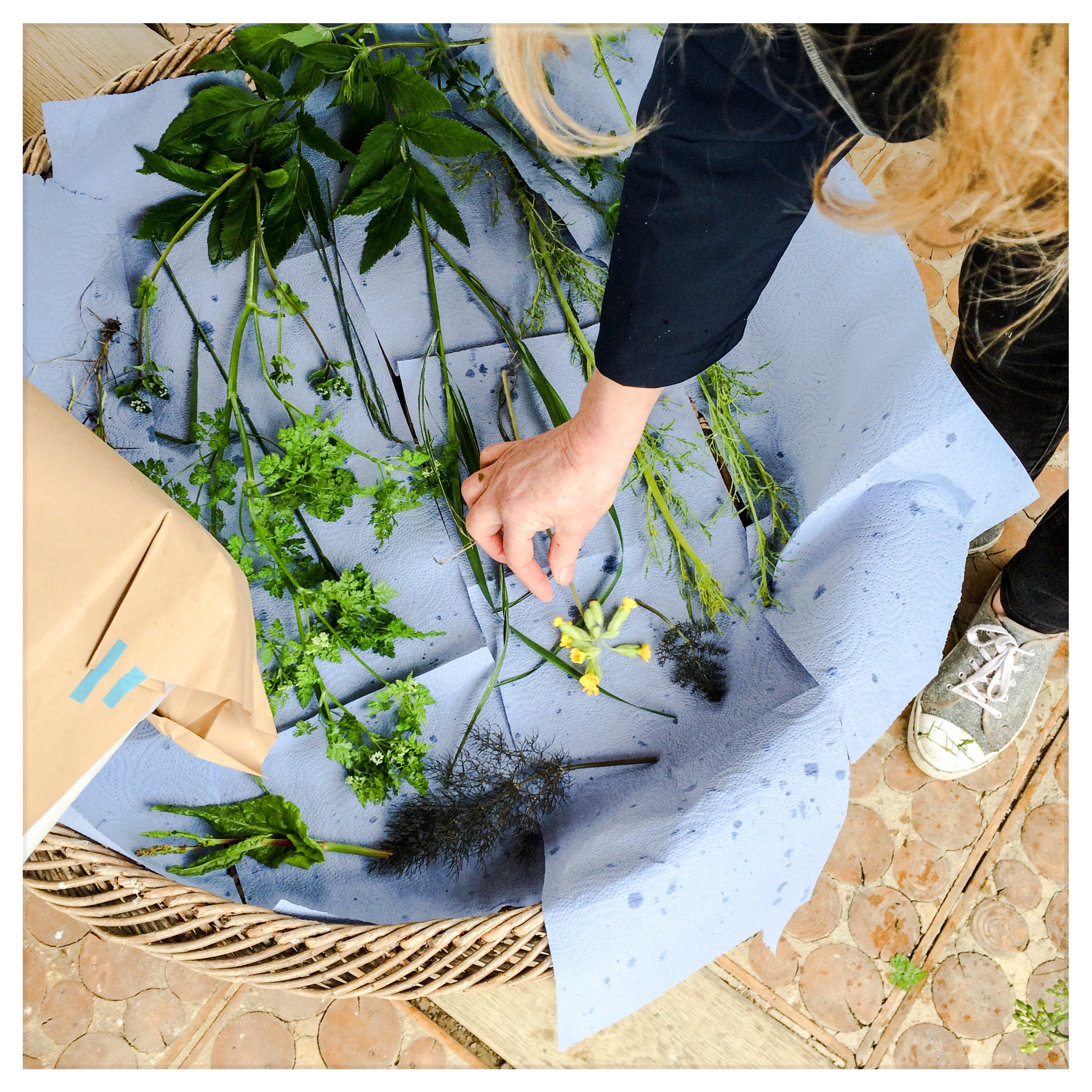 Drying rainswept herbs at the May workshop at Daylesford.