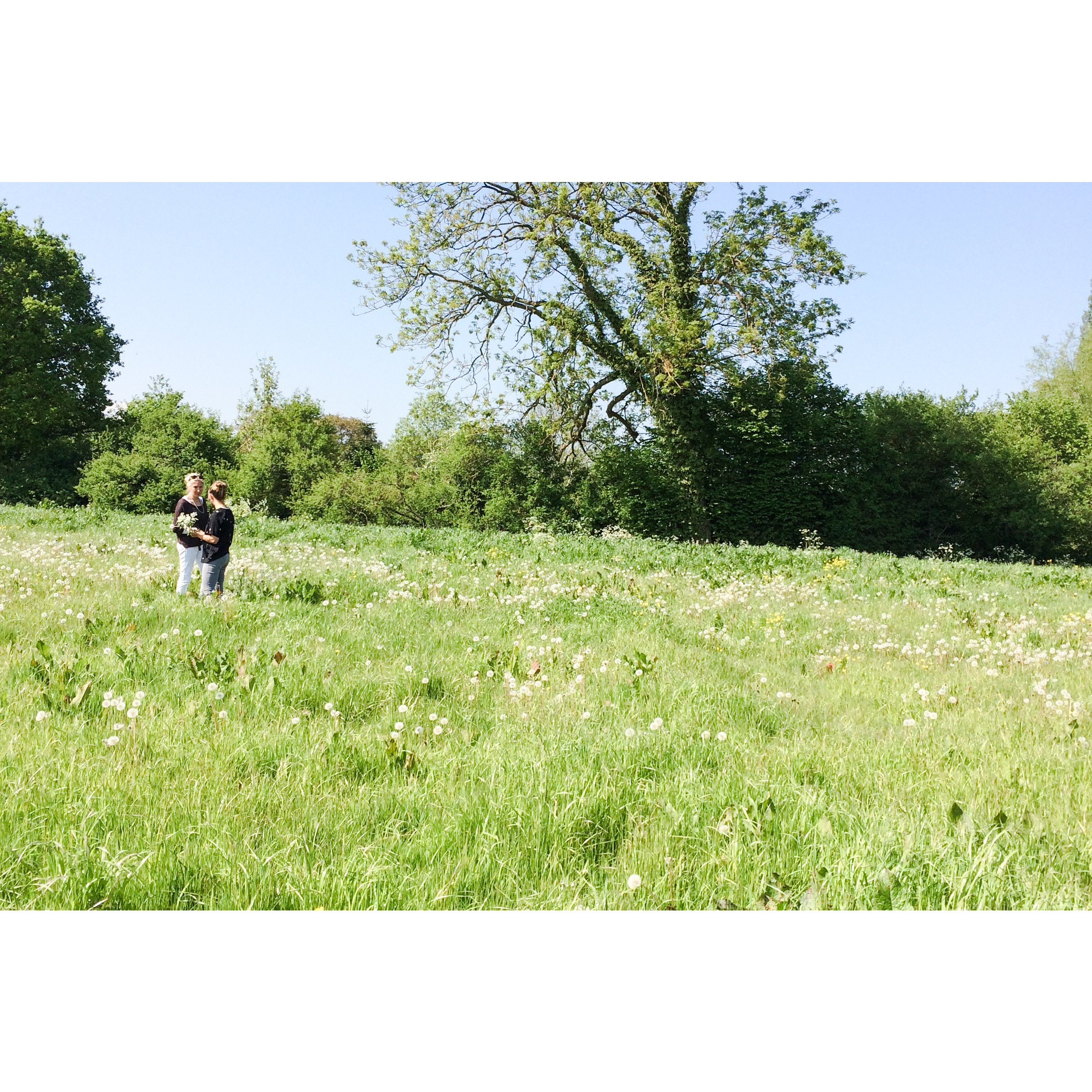 Foraging for plants in the meadows surrounding Meadowmead. May 2019.