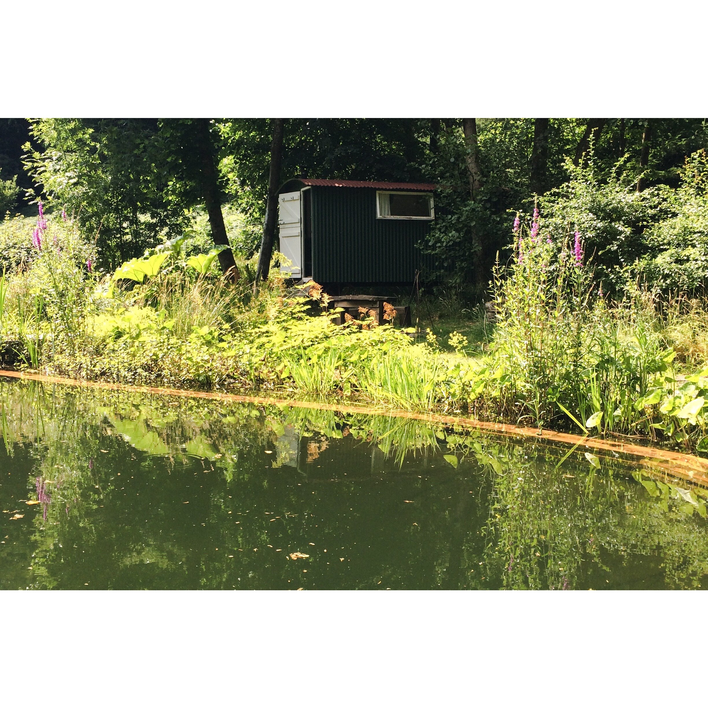 Swimming Pond and Shepard Hut at the Garden.