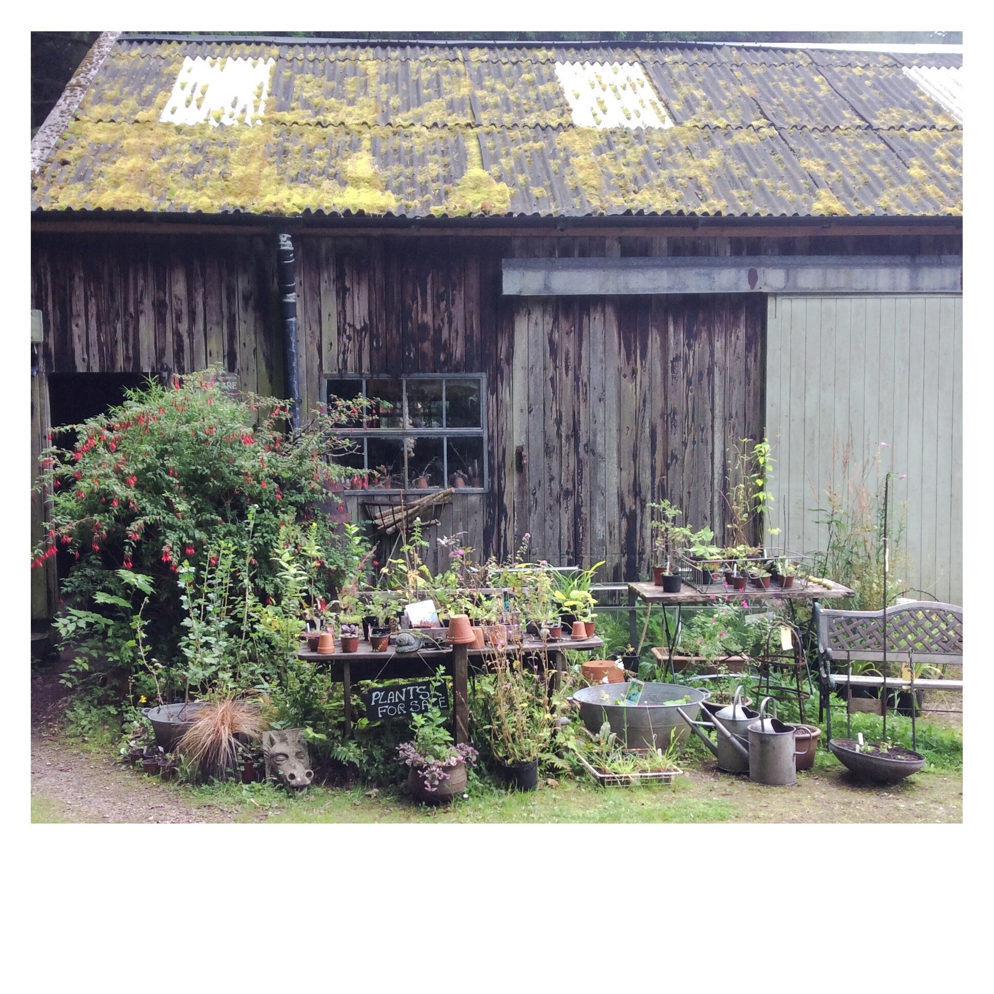 The Potting Shed, Nant y Bedd. August 2019.
