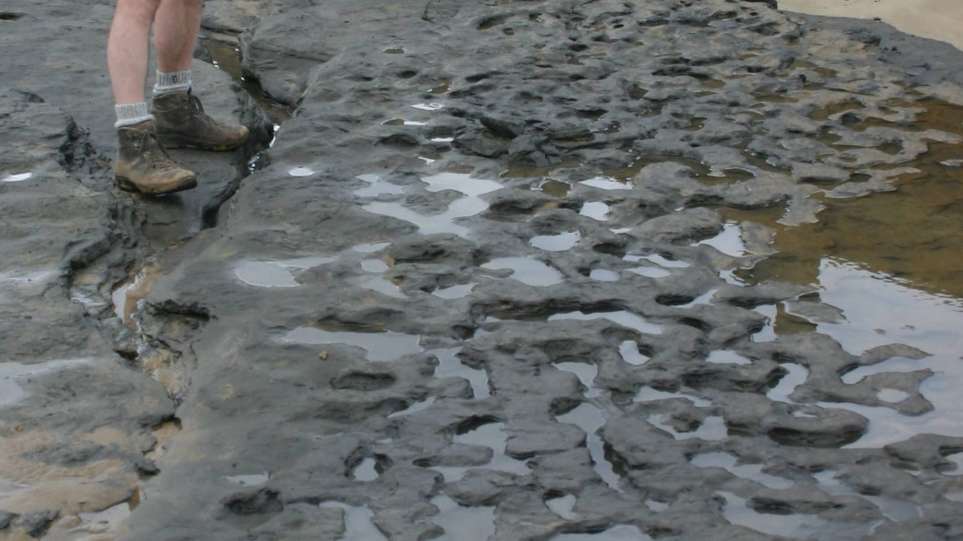 These footprints at Happisburgh in Norfolk are over 500,000 years old.