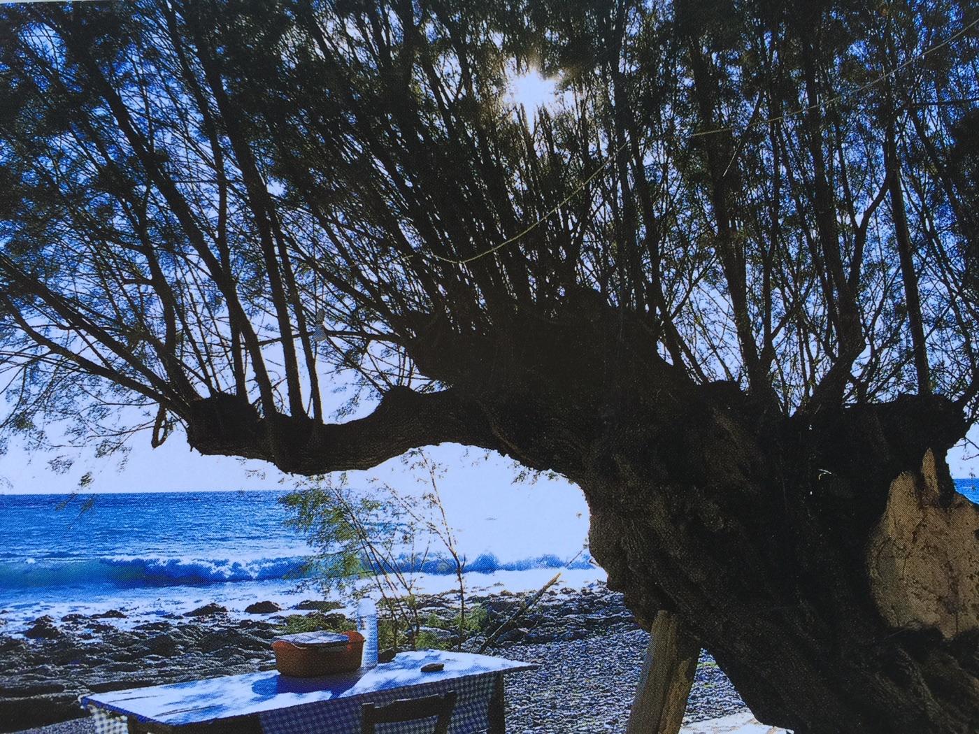 Olive-tree-sea.jpg