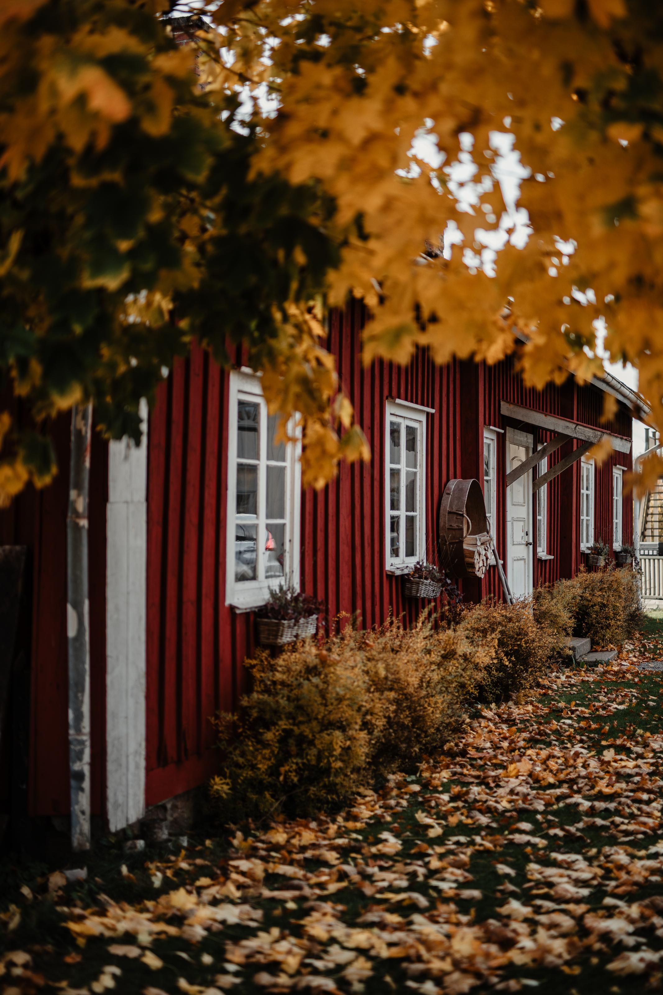 Bröllopsfotograf-Uddetorp Säteri-Höstbröllop-Fotograf Emilia- Bröllopsfotograf Borås-1.jpg