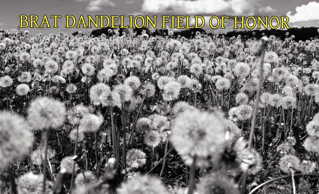 BRAT DANDELION FIELD OF HONOR