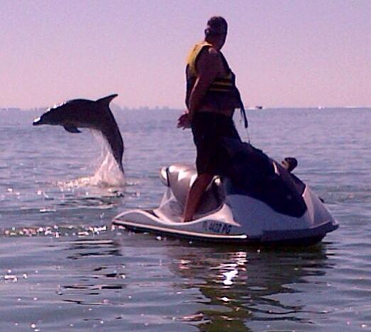 Dolphin Jumping (1).jpg