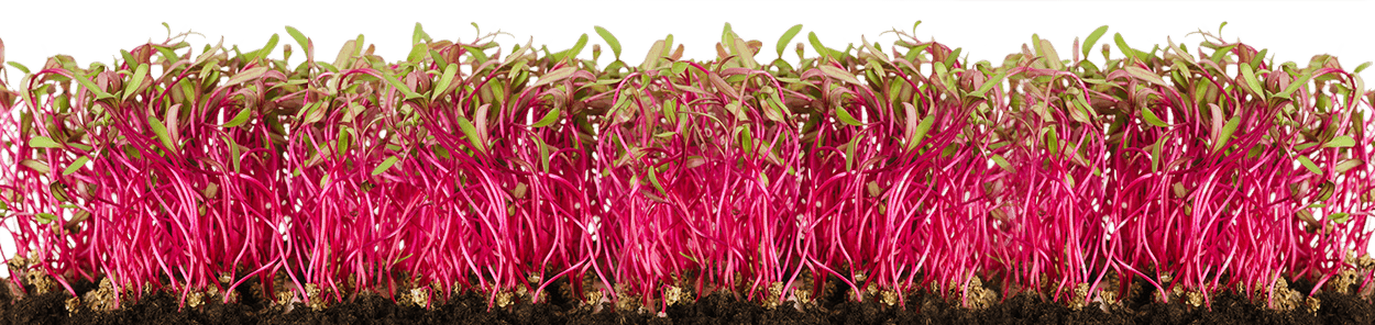 micro_greens_1250_wide_sml.png