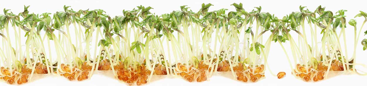 sprouts-2.jpg