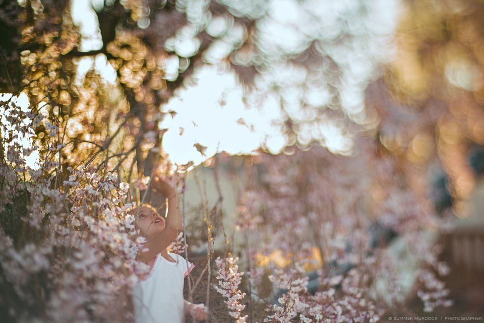 © Summer Murdock   Photographer 365