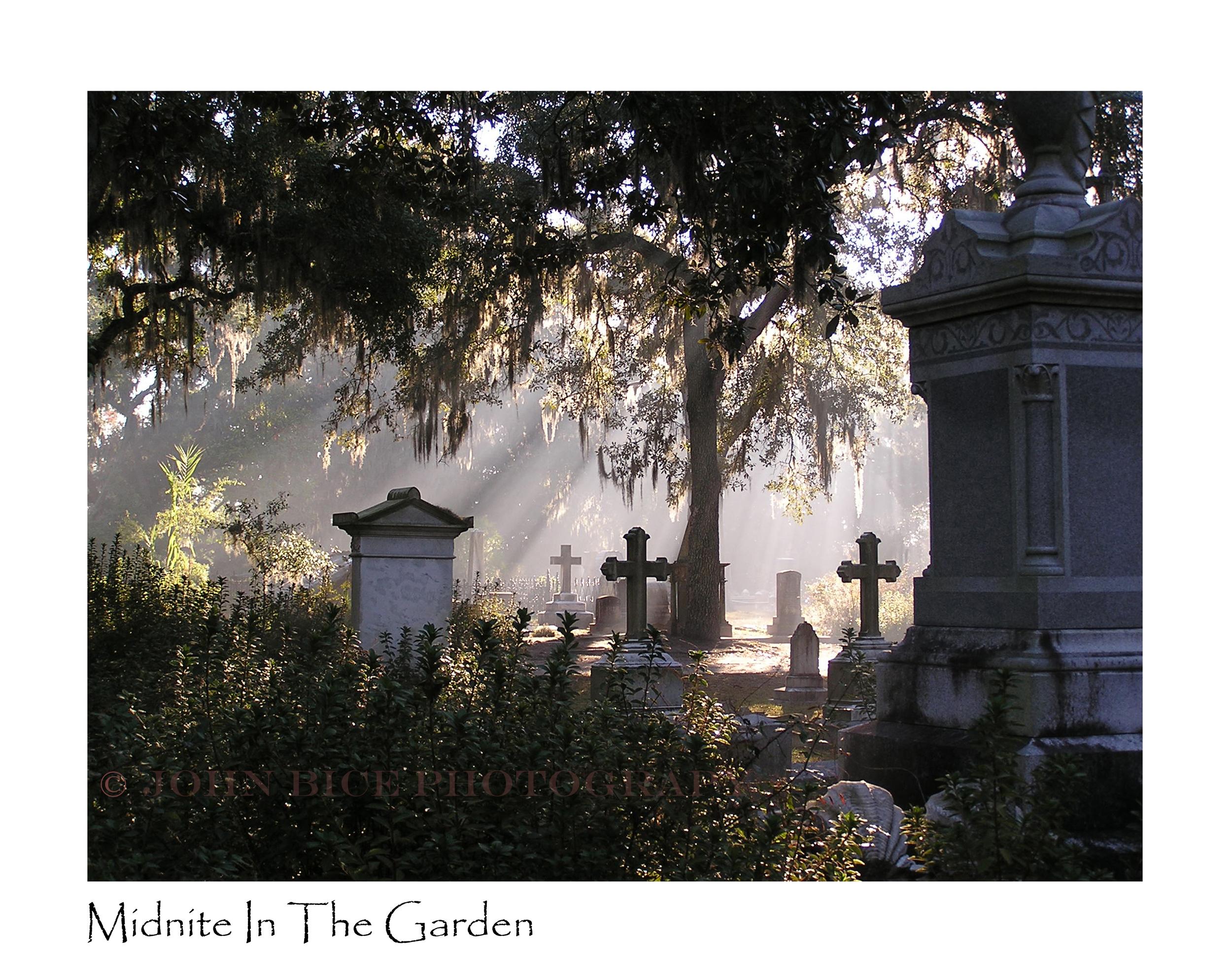 Midnite InThe Garden.jpg