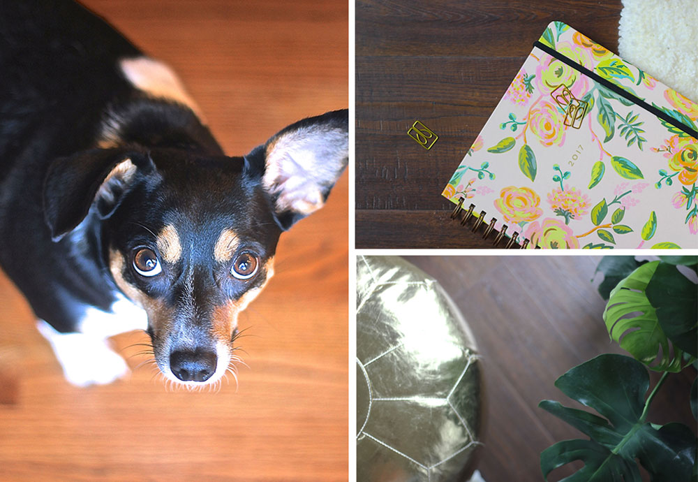 With a new dog, a renewed love for houseplants, and a 20-year old carpet, I was convinced that we needed new flooring!
