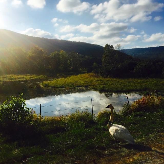 #empireeverywhere #swan #goose #boxleyvalley #skyporn #beautiful #pond #poncaAr #newtoncountAR #jasperAr #lostvalleystatepark #whitakerpoint #gooutside #killyourtv #roadtrip #adventure