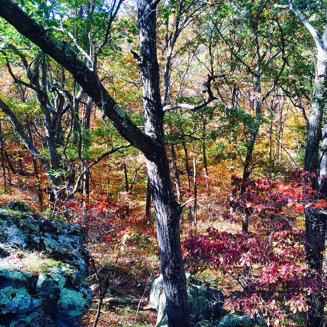 Fall in Missouri #fall #missouri #empireeverywhere #leaves #autumn #trees #earthquakehollowdreams #rainbow #colorful #foliage @swoldy_locks @ashstache_ #beautifulday #gooutside #killyourtv