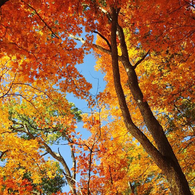Fall in Missouri #fall #leaves #foliage #empireeverywhere #CuntCaveSecretSociety #treeporn #killyourtv #gooutside #katytrail #bluffstyle @swoldy_locks  #freepumpkins