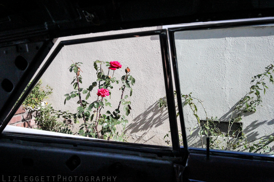 2014_Liz_Leggett_Photography_California_Watermarked-7761.jpg