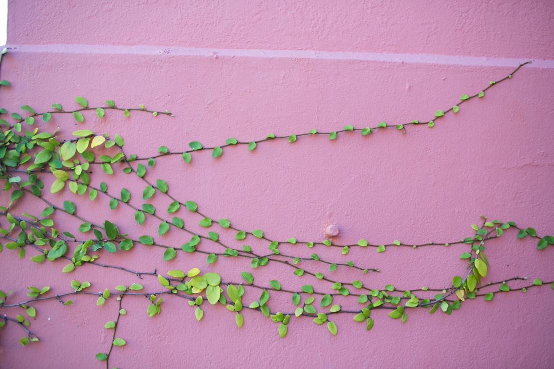 CharlestonBlog-3.jpg