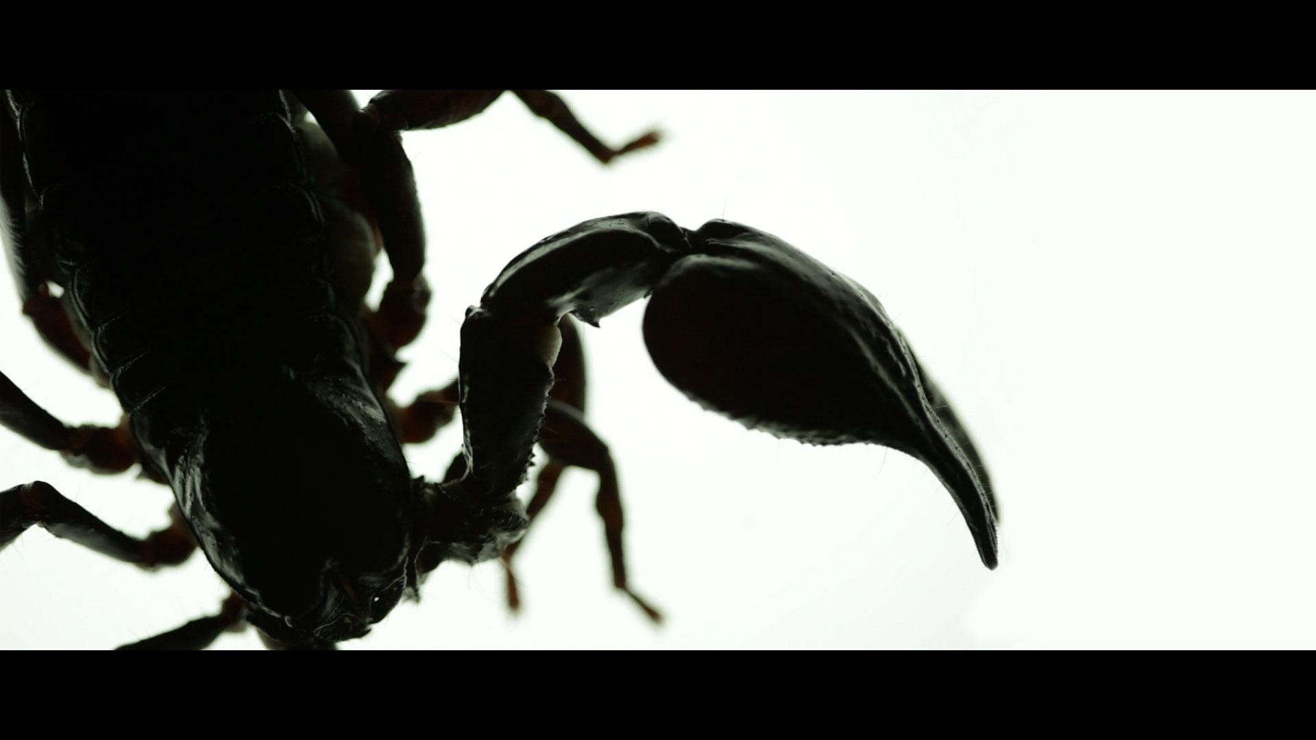Scorpion_05.jpg