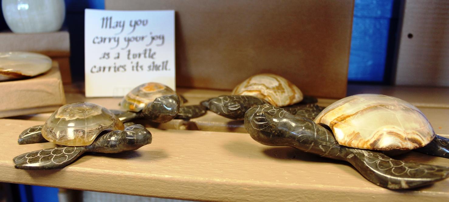 turtles 3.jpg
