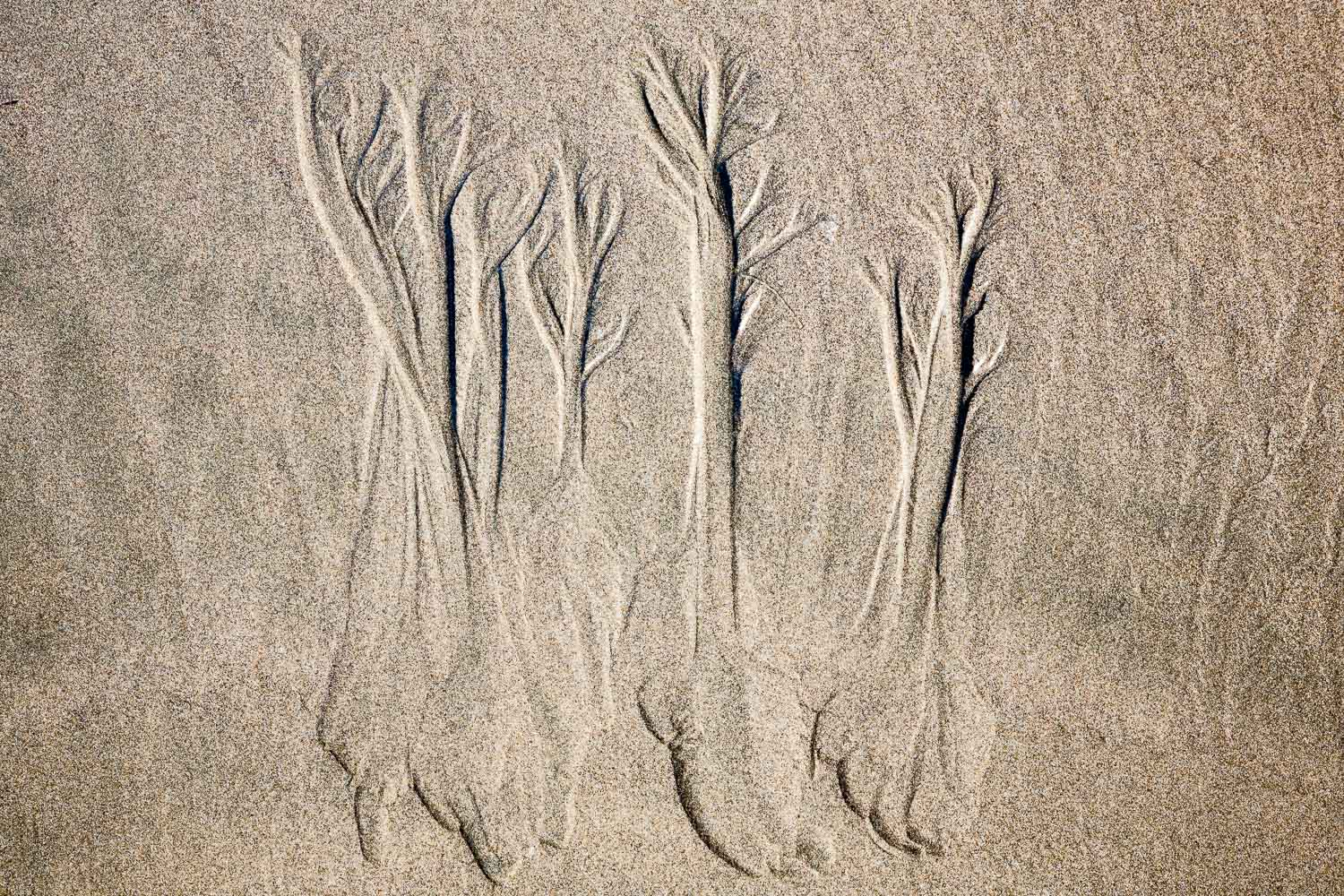 Trees of Sand I
