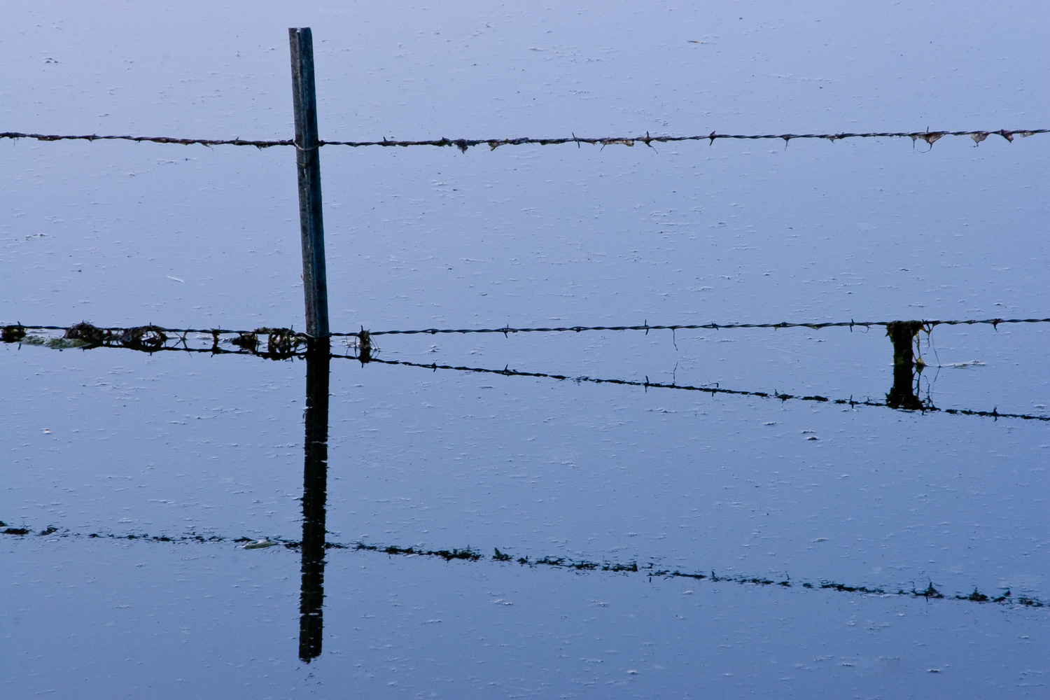 Mirrored Fence