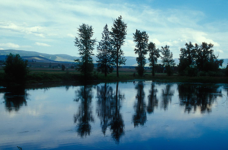 Lee Metcalf Reflection