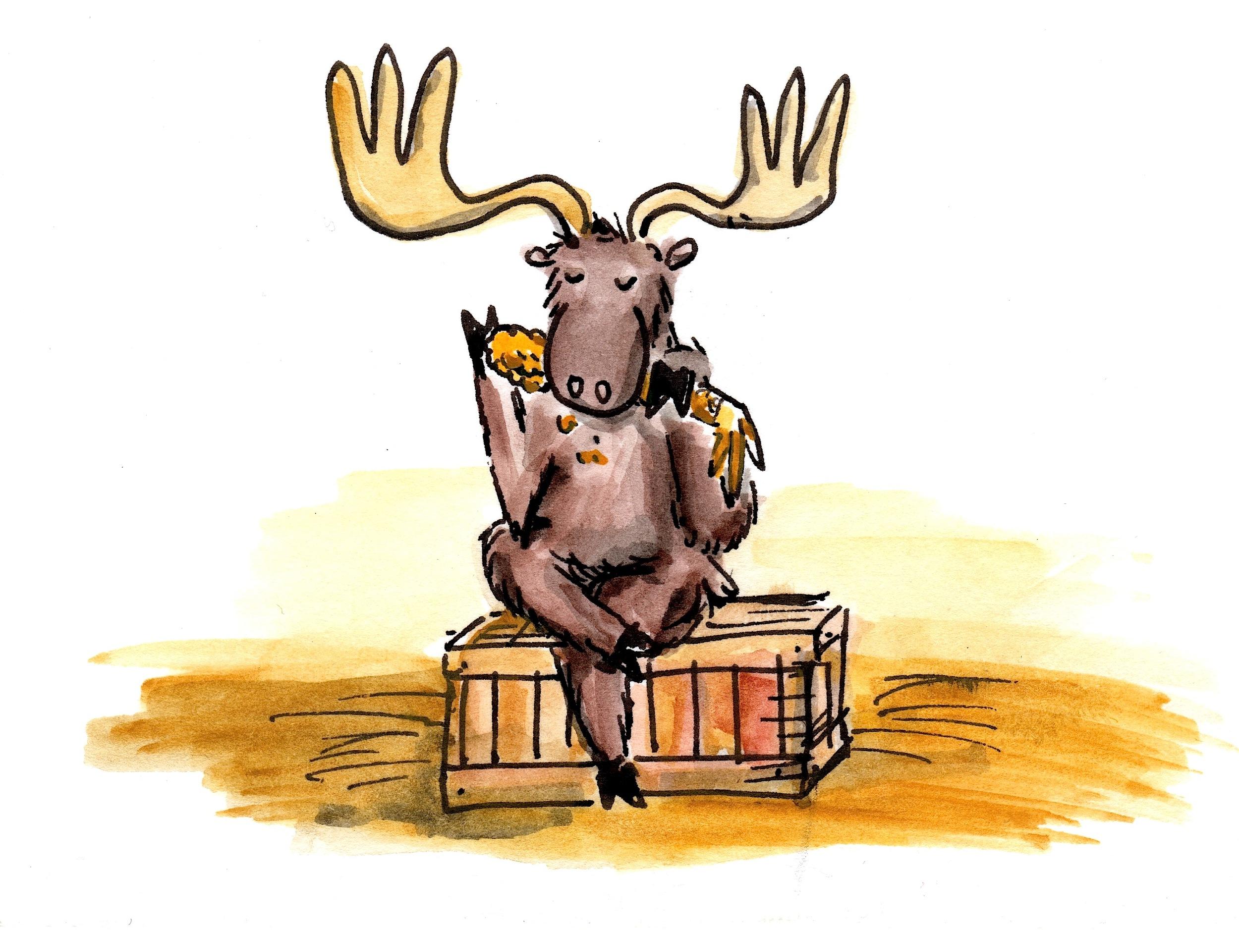 moose 2.jpeg