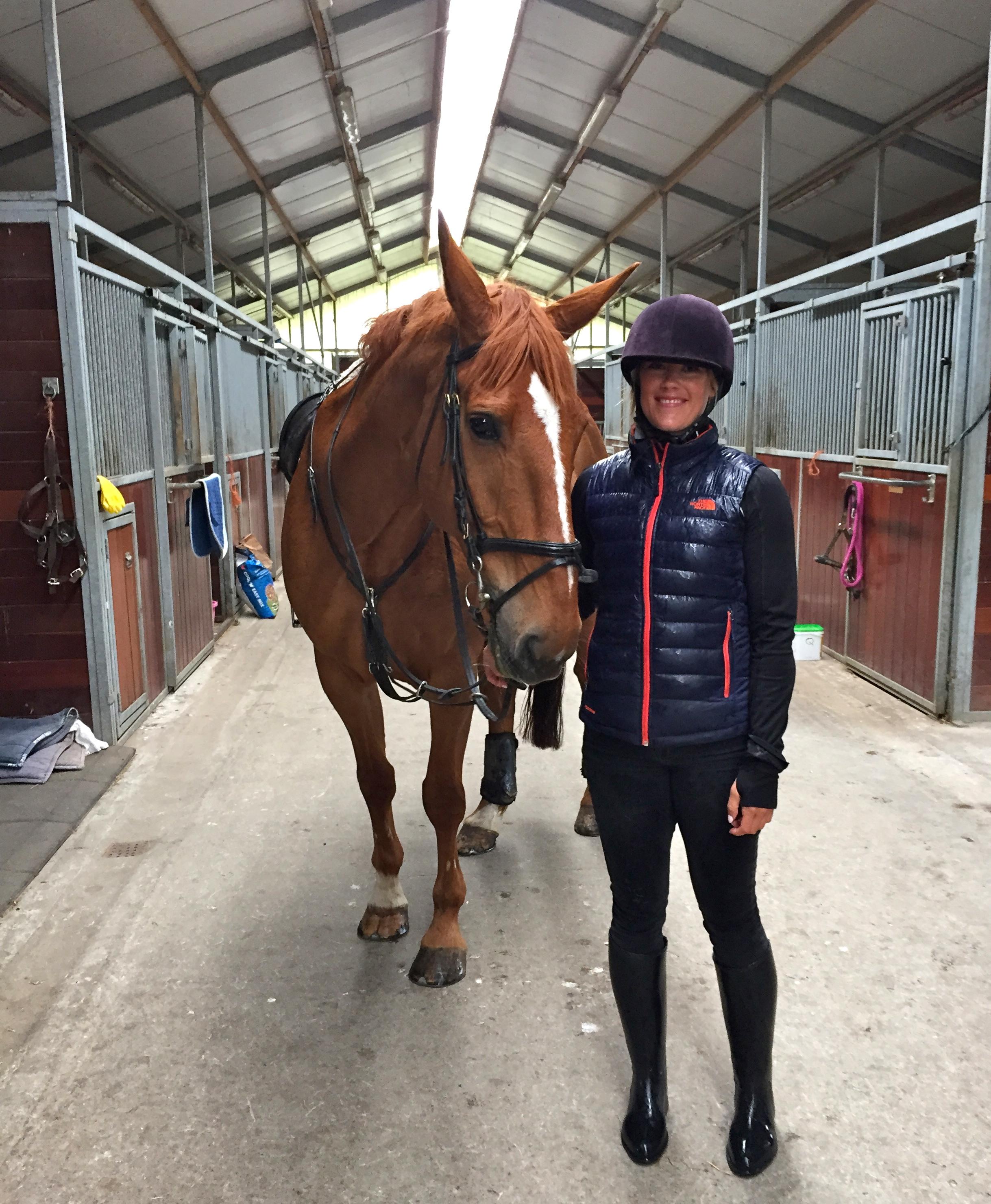 Everyone, meet Dave! Mr. Handsome. Mount Juliet Equestrian Center, Thomastown, Co. Kilkenny, Ireland.