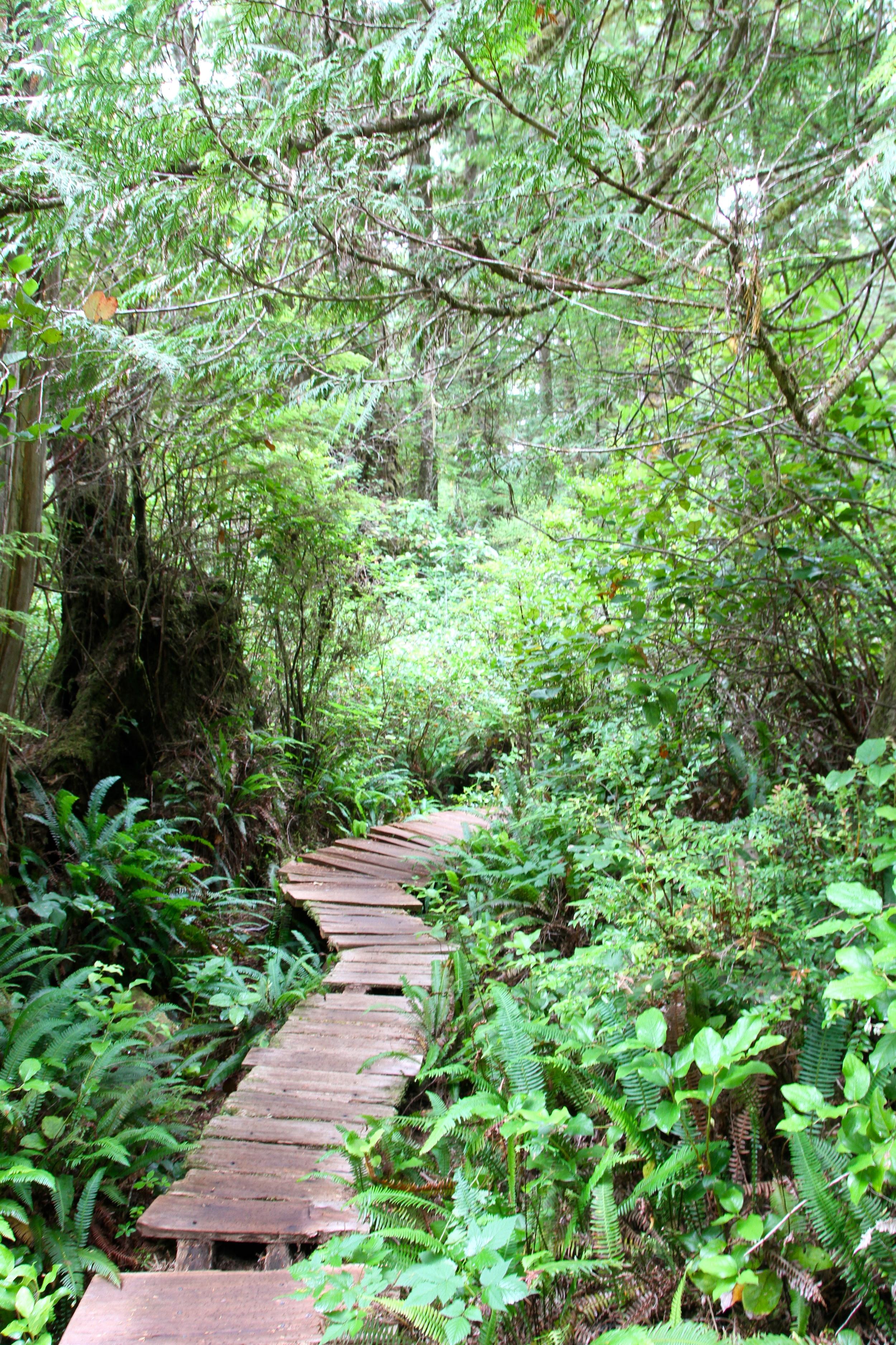 Big Tree Trail, Meares Island, Tofino, BC, Canada.