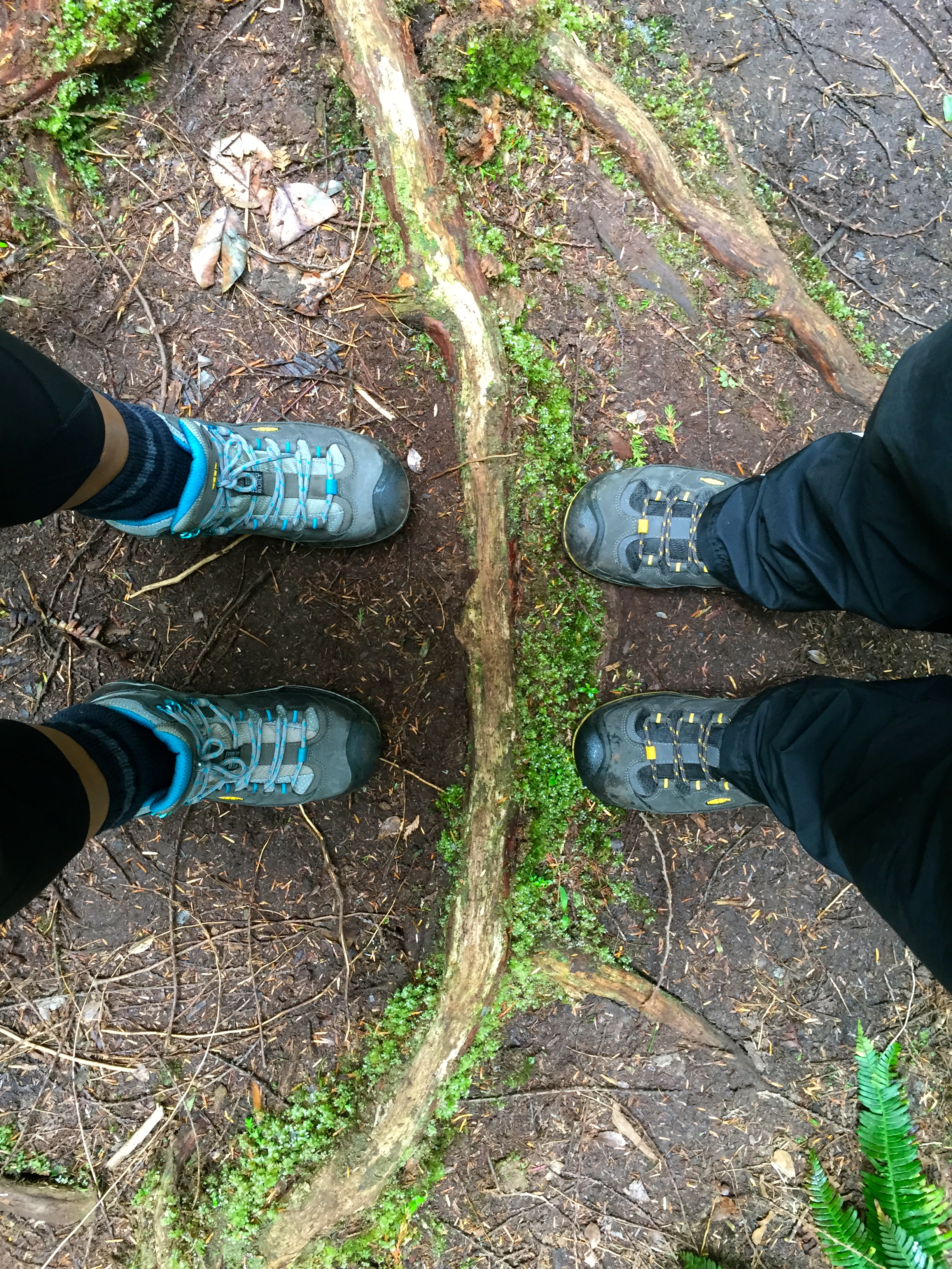 Knocking boots on the Big Tree Trail, Meares Island, Tofino, BC, Canada.