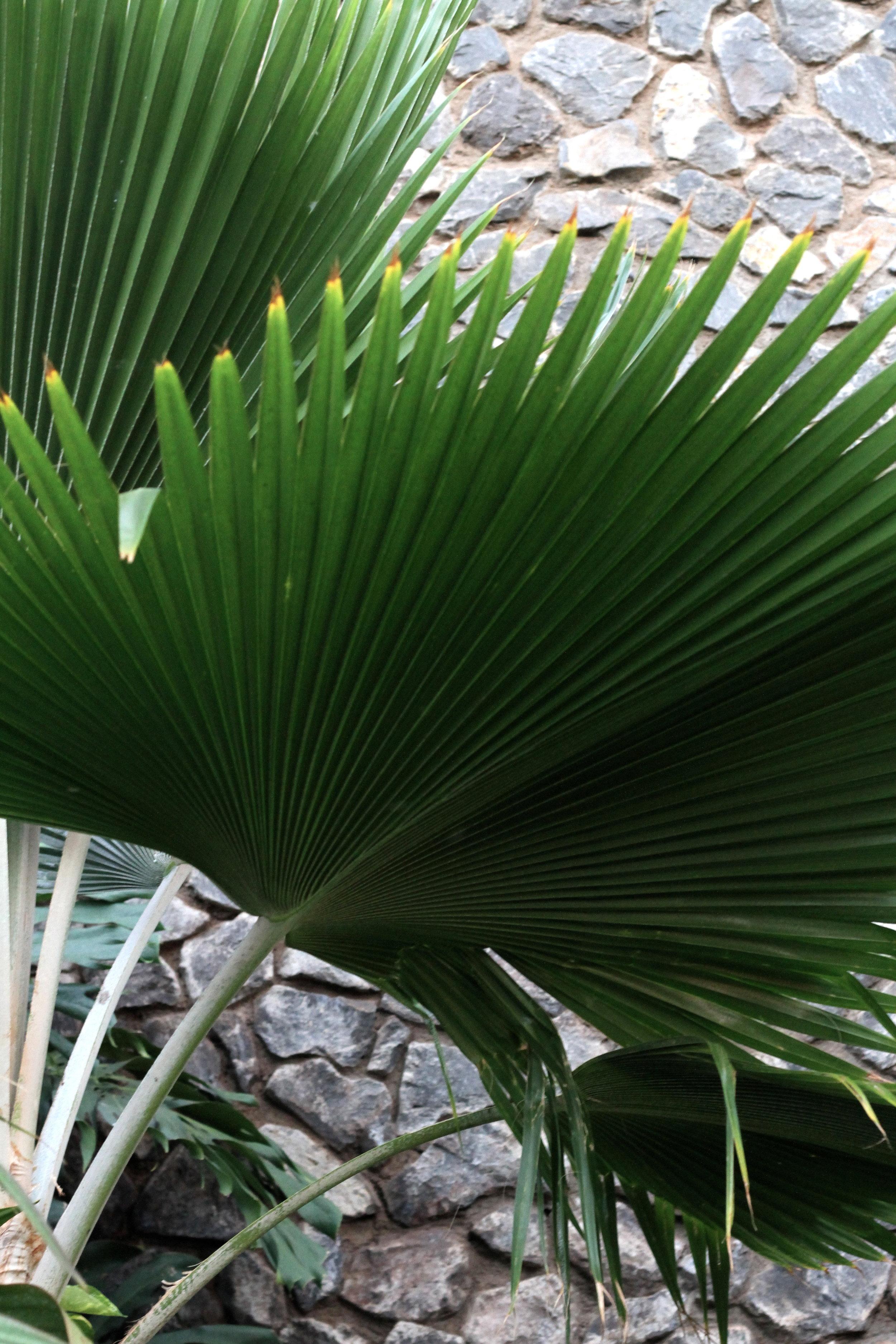 Tropical Plant, Maui, Hawaii