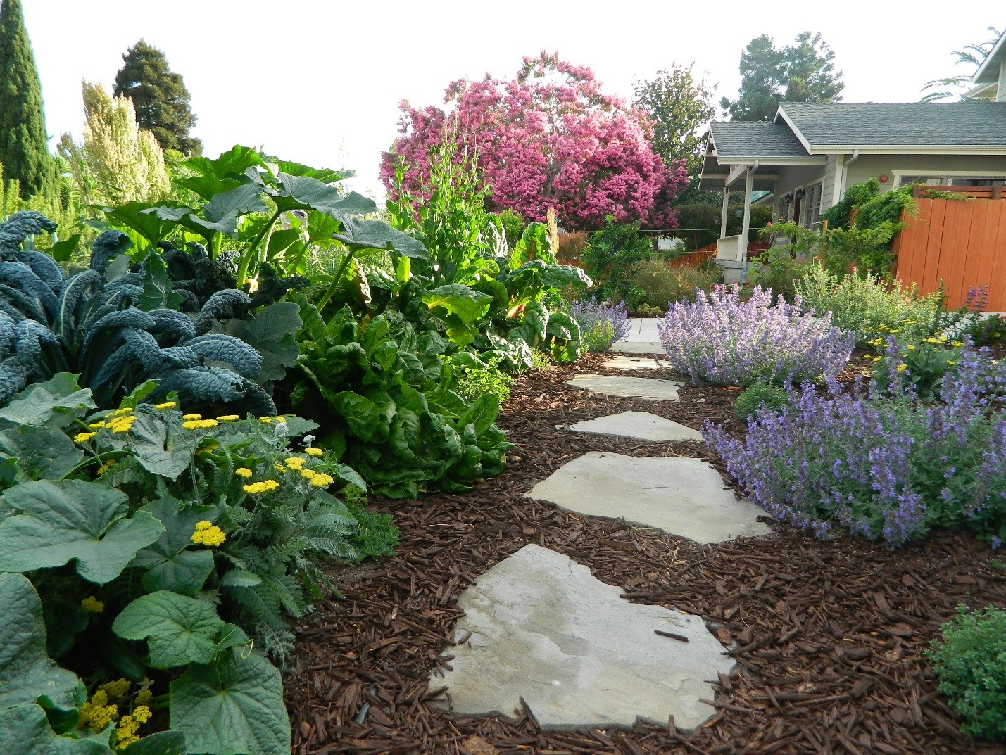 """Here is a interplanted veggie garden using """"Keyhole"""" planter beds loaded with perennial edibles like kale, chard, thyme, and oregano. Growing different size plants next to each other uses the planting space most efficiently as they can fill out their own niches."""