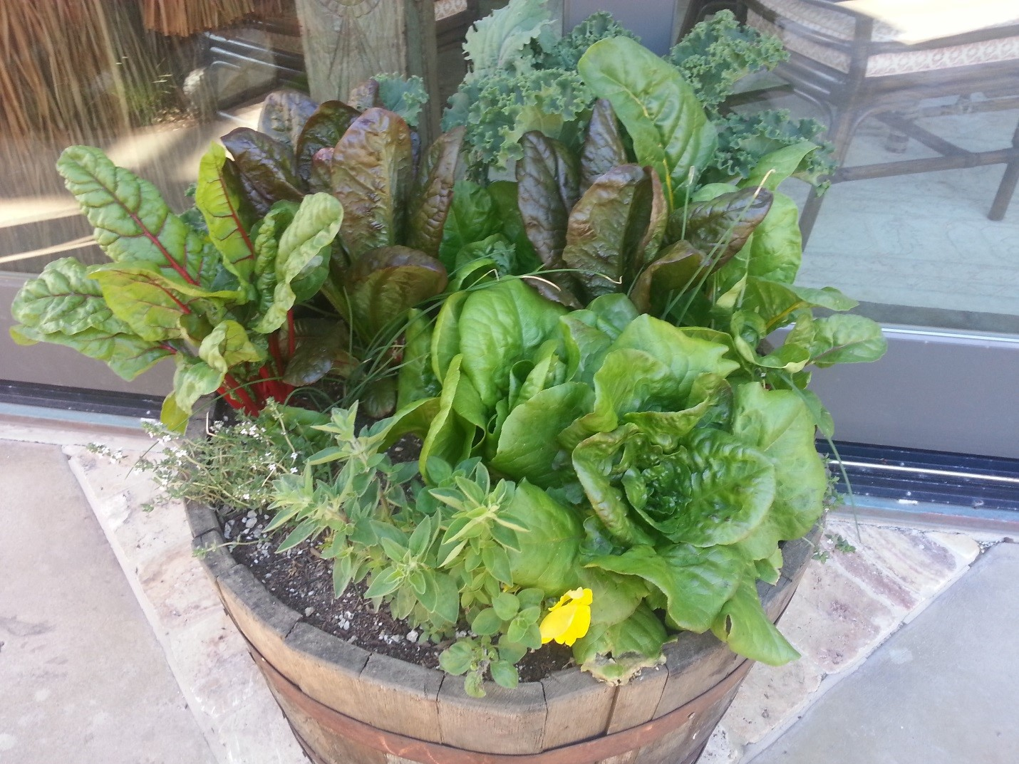 Any size container will do to grow food in your own backyard. Here is a whiskey barrel full of winter herbs, flowers, & greens. Happy growing and eating from your backyard this winter! Contact us today to help design, build, or prepare your gardens for seeding and planting.