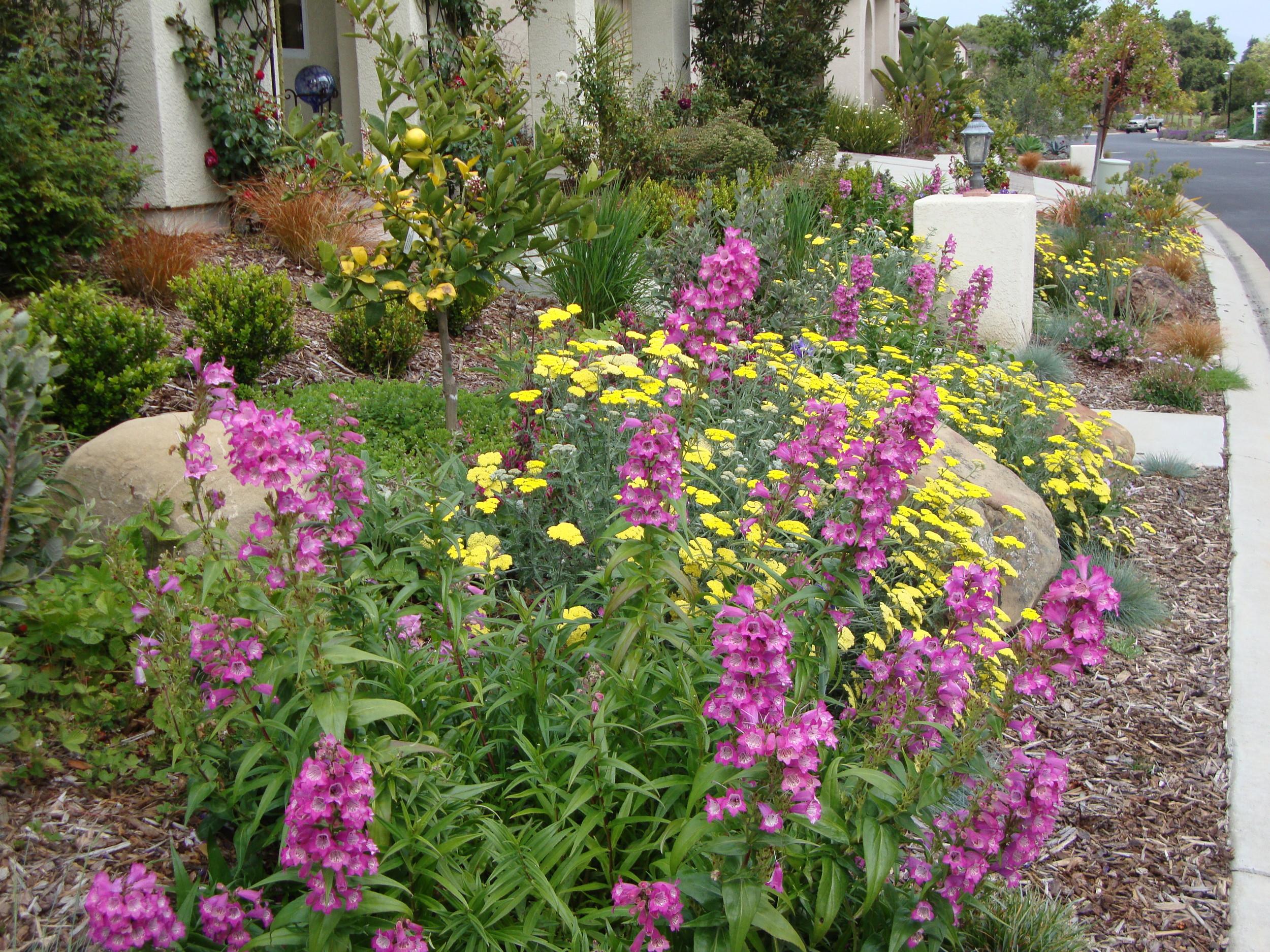 Mediterranean & Native Gardens