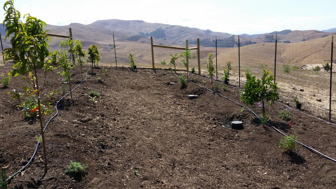 Food Forest - Graywater 1.jpg
