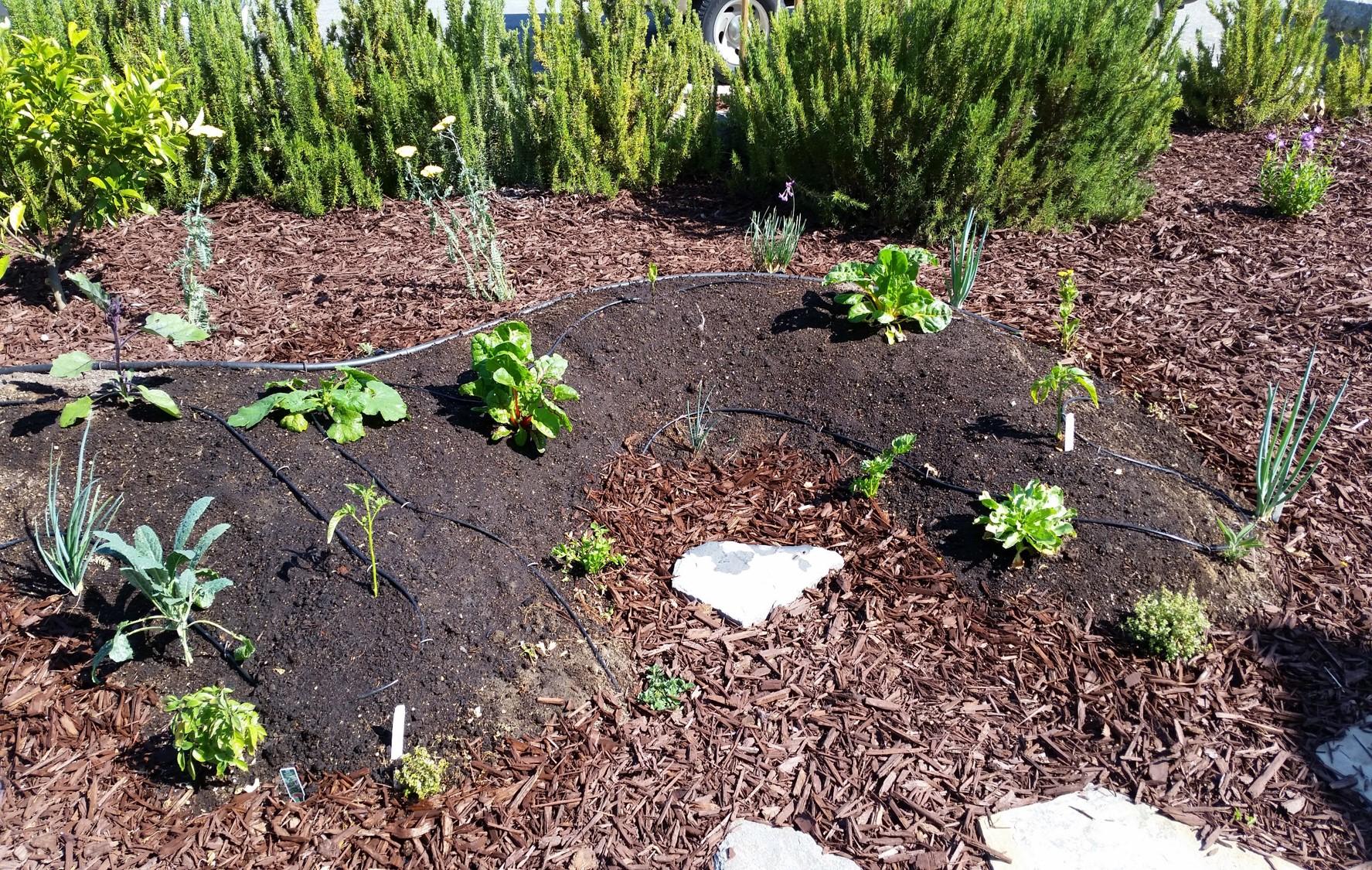Planter Mound Drip.jpg