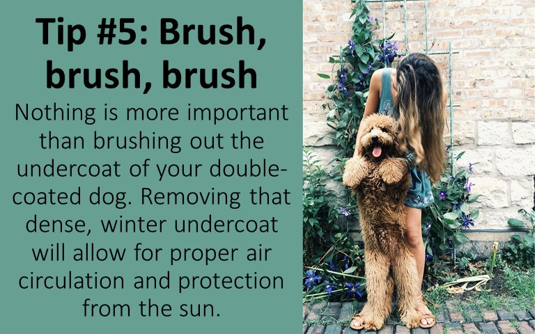 Grooming and brushing your dog regularly is the best way to keep your dog cool and not have hair all over the place
