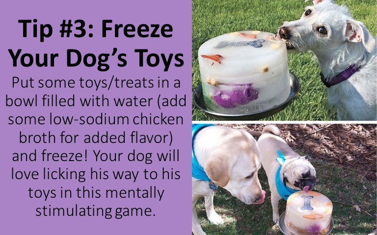 Freezing the dog toys will also keep your pup busy for hours!