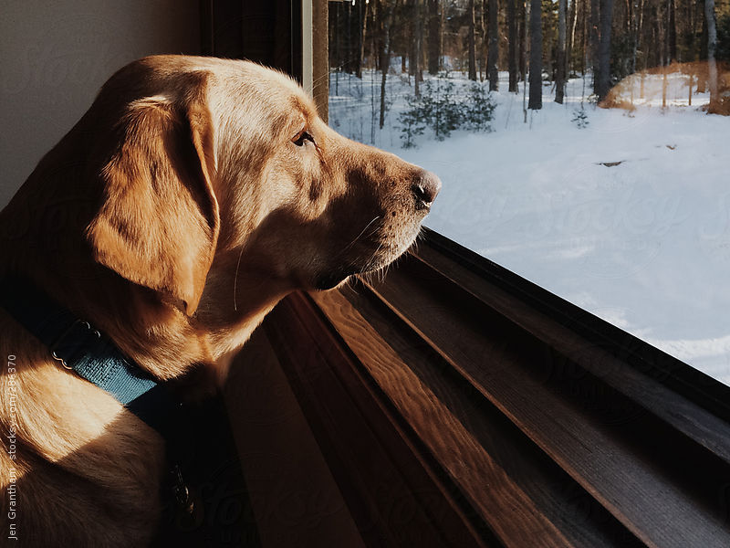 Photo of dog looking out window in winter | Jen Grantham on Stocksy United