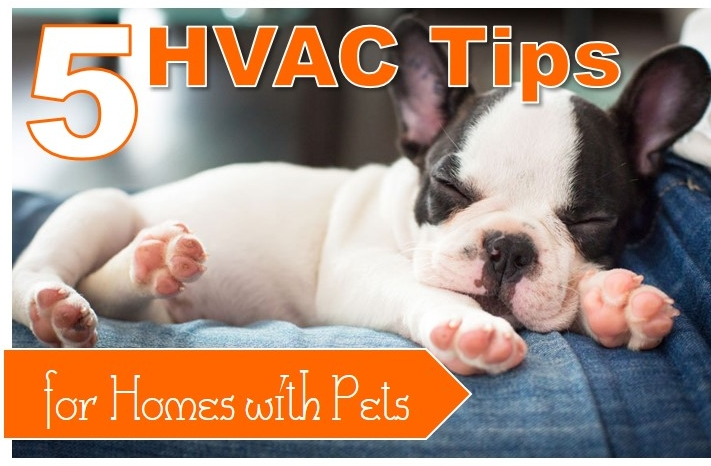 5 HVAC Tips for Homes with Pets.jpg