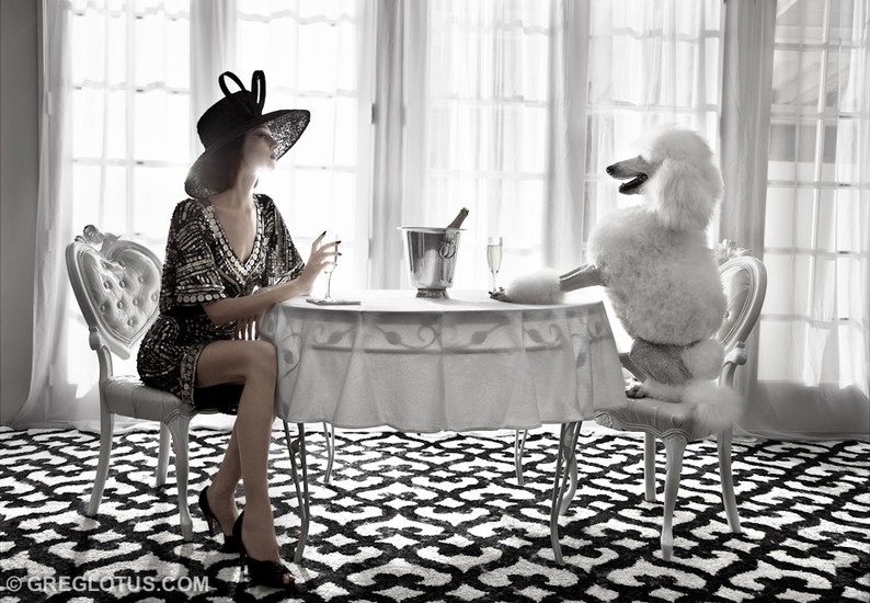 «Champagne Poodle»