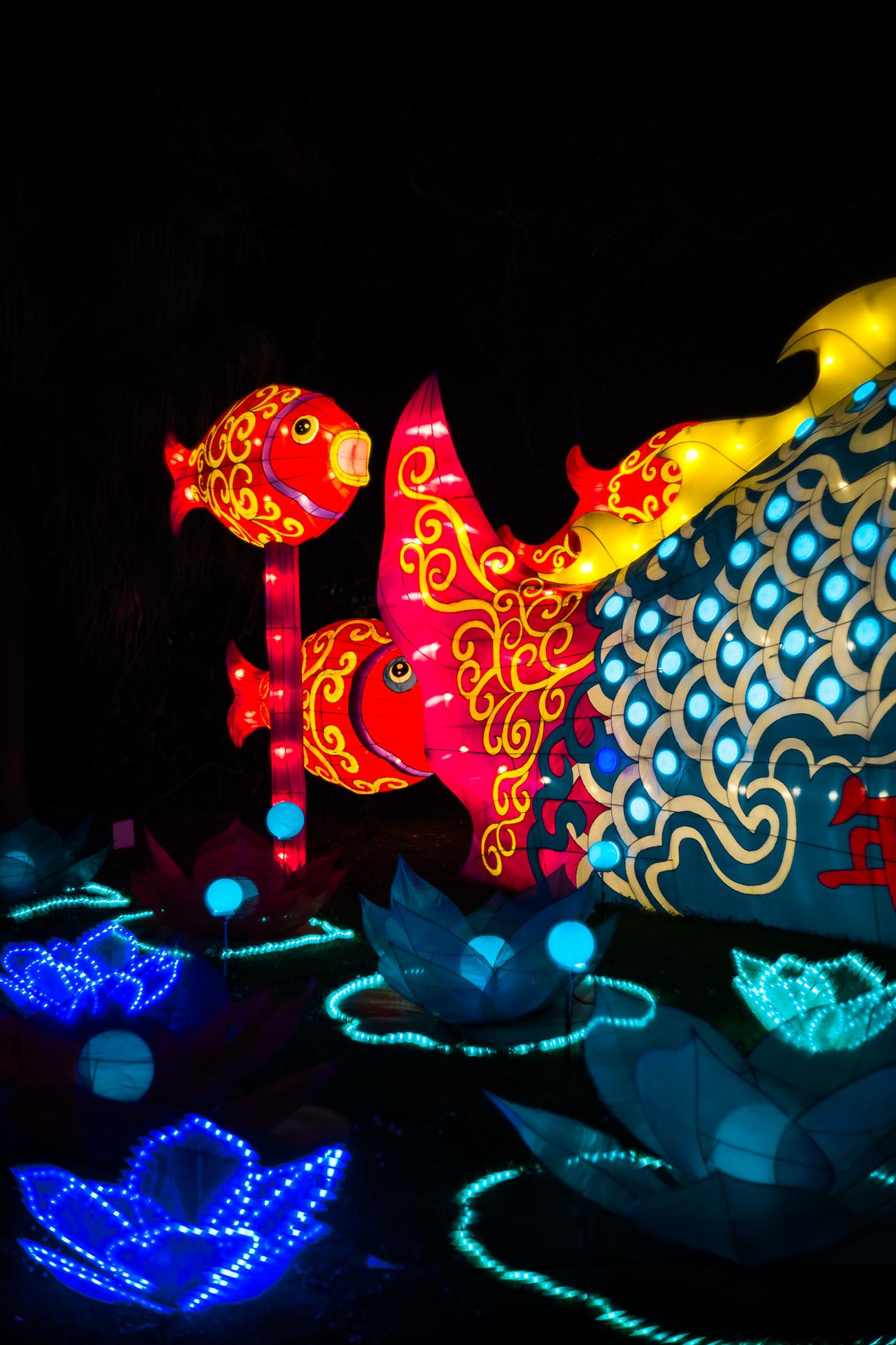 china_lights-150.jpg