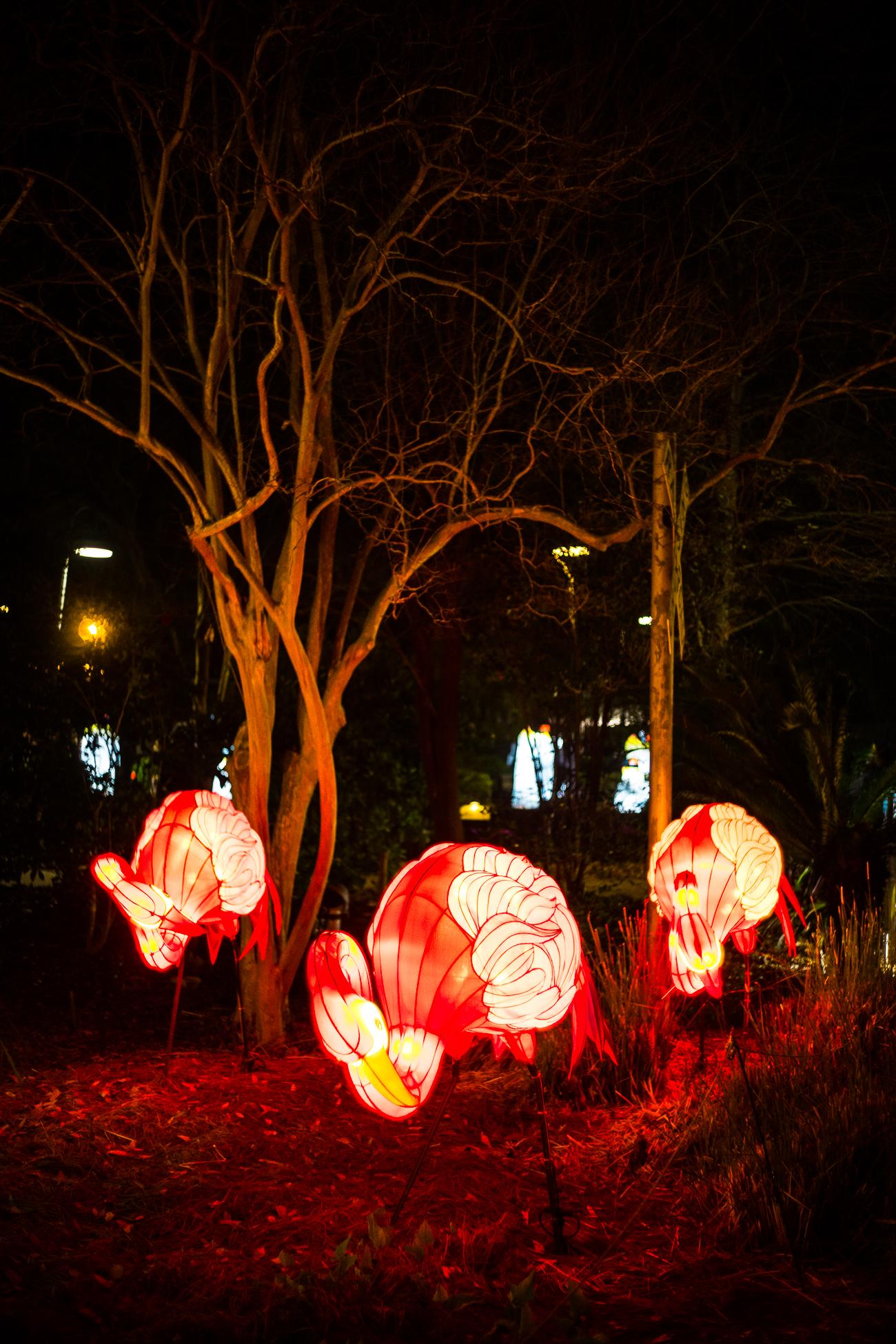 china_lights-177.jpg