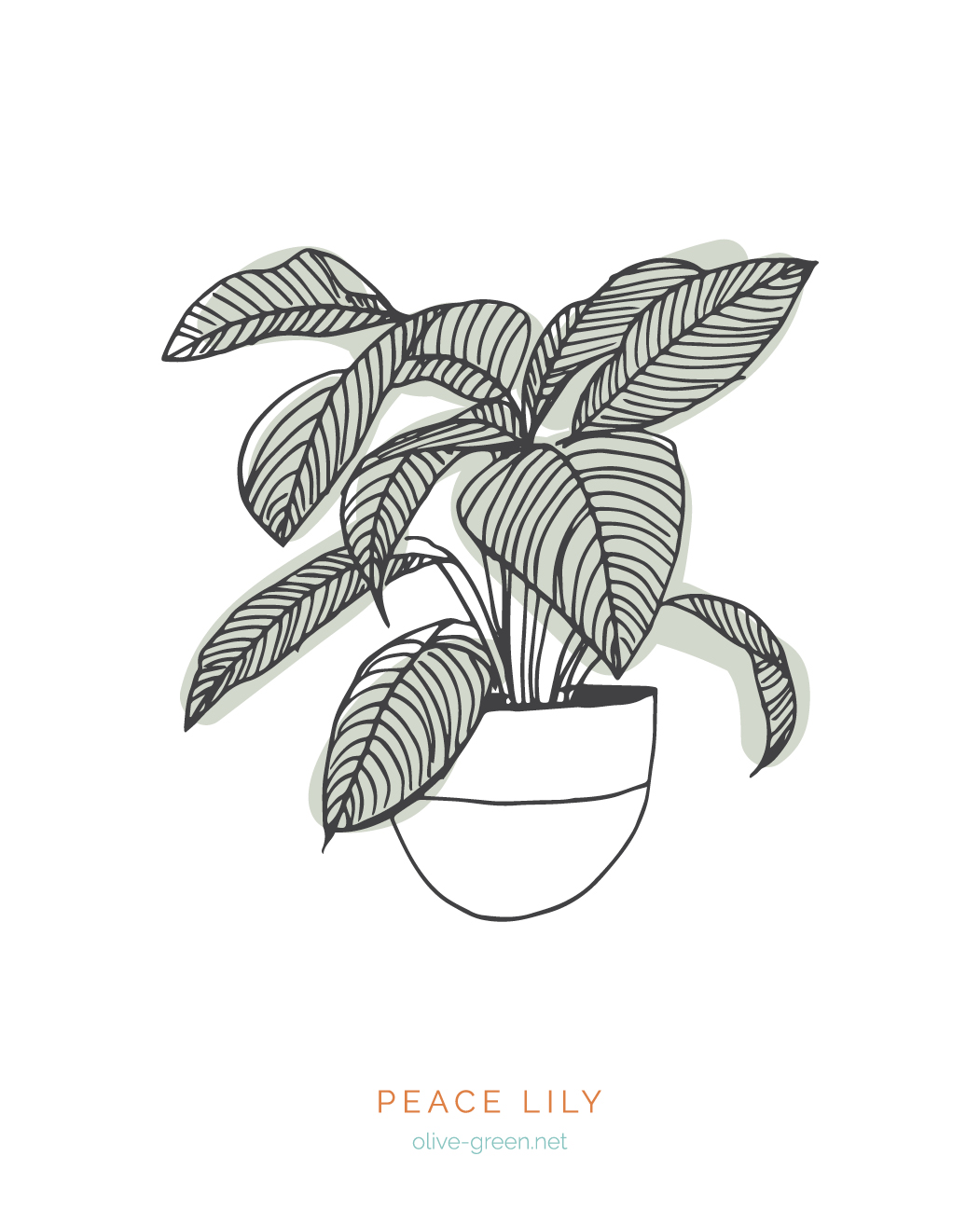 Plant Cards Images3.jpg