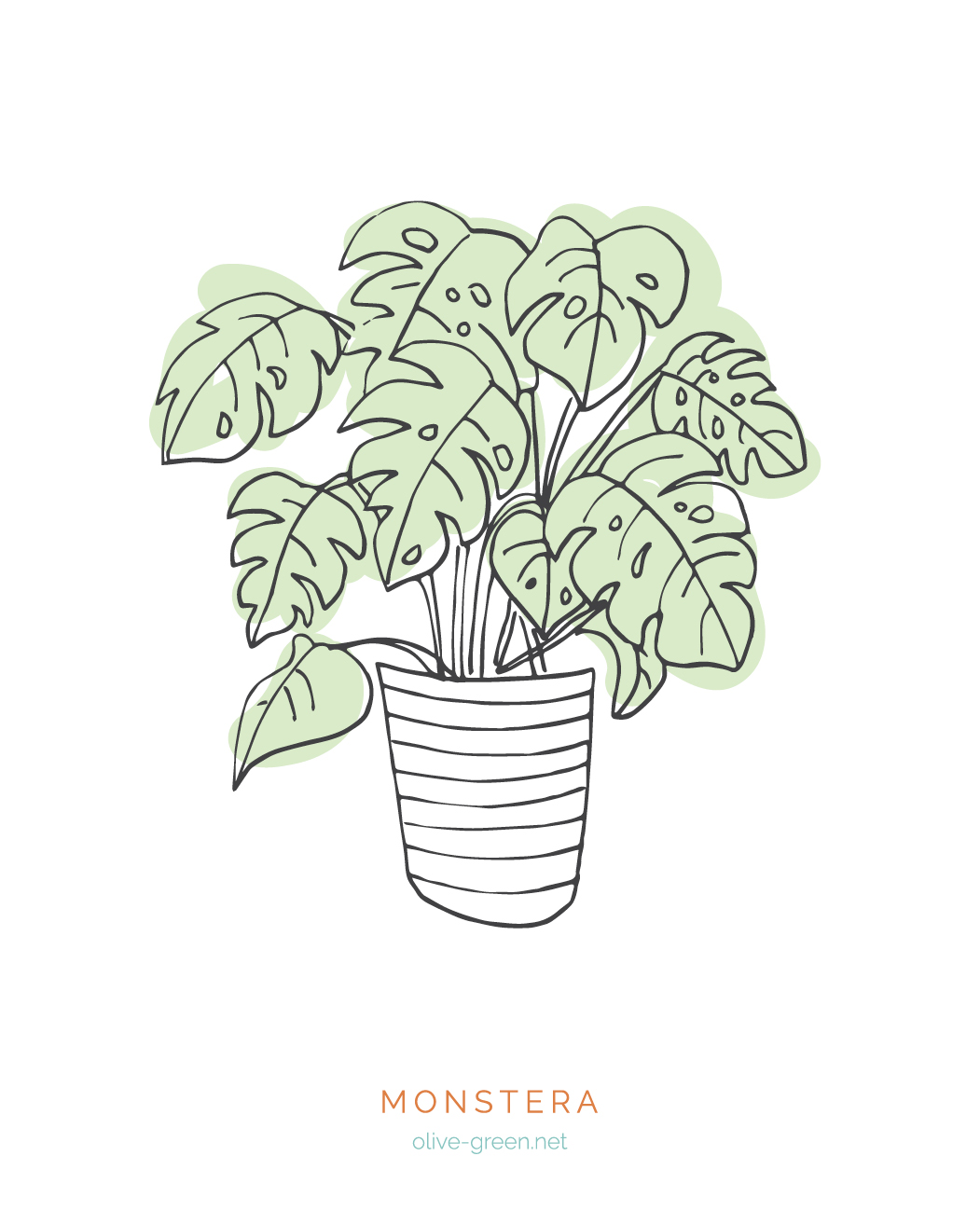 Plant Cards Images6.jpg