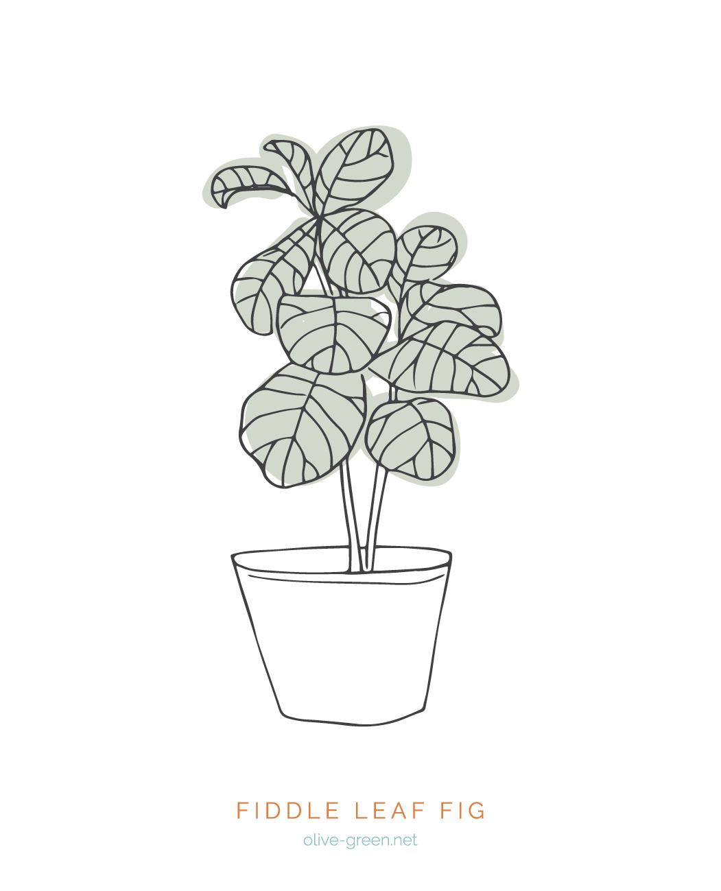 Plant Cards Images8.jpg