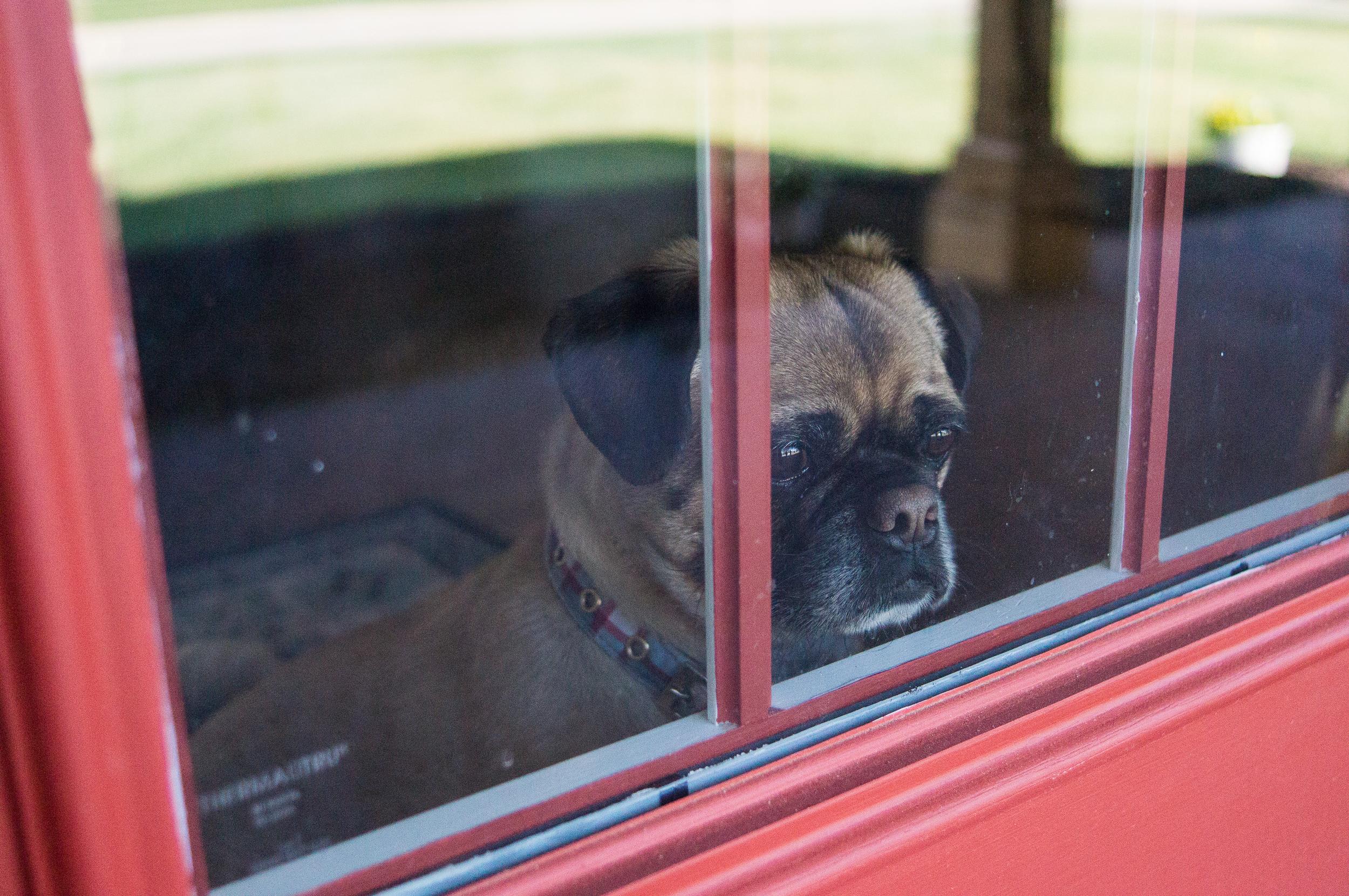 dog at door.jpg
