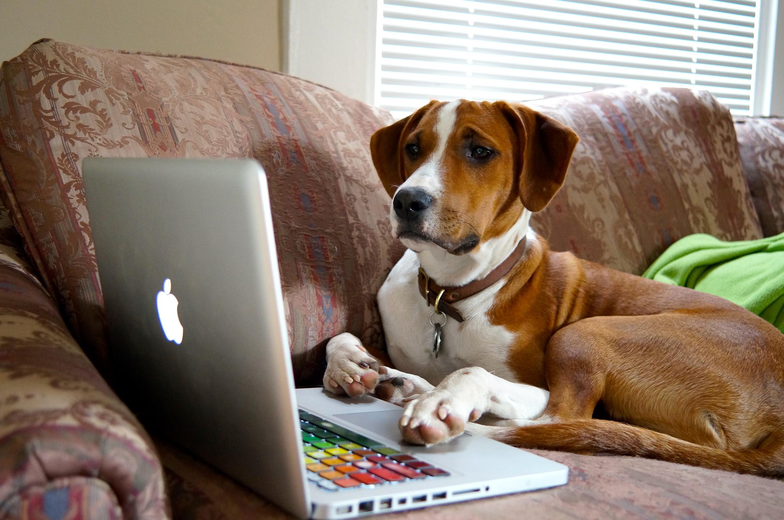 dog computer.jpg