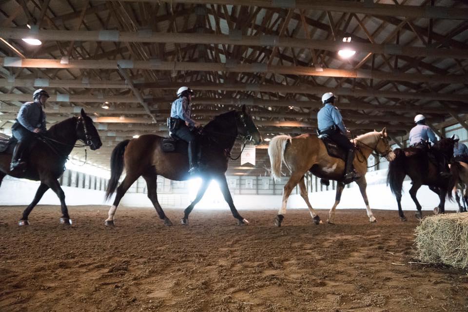 police horse mounted patrol.jpg