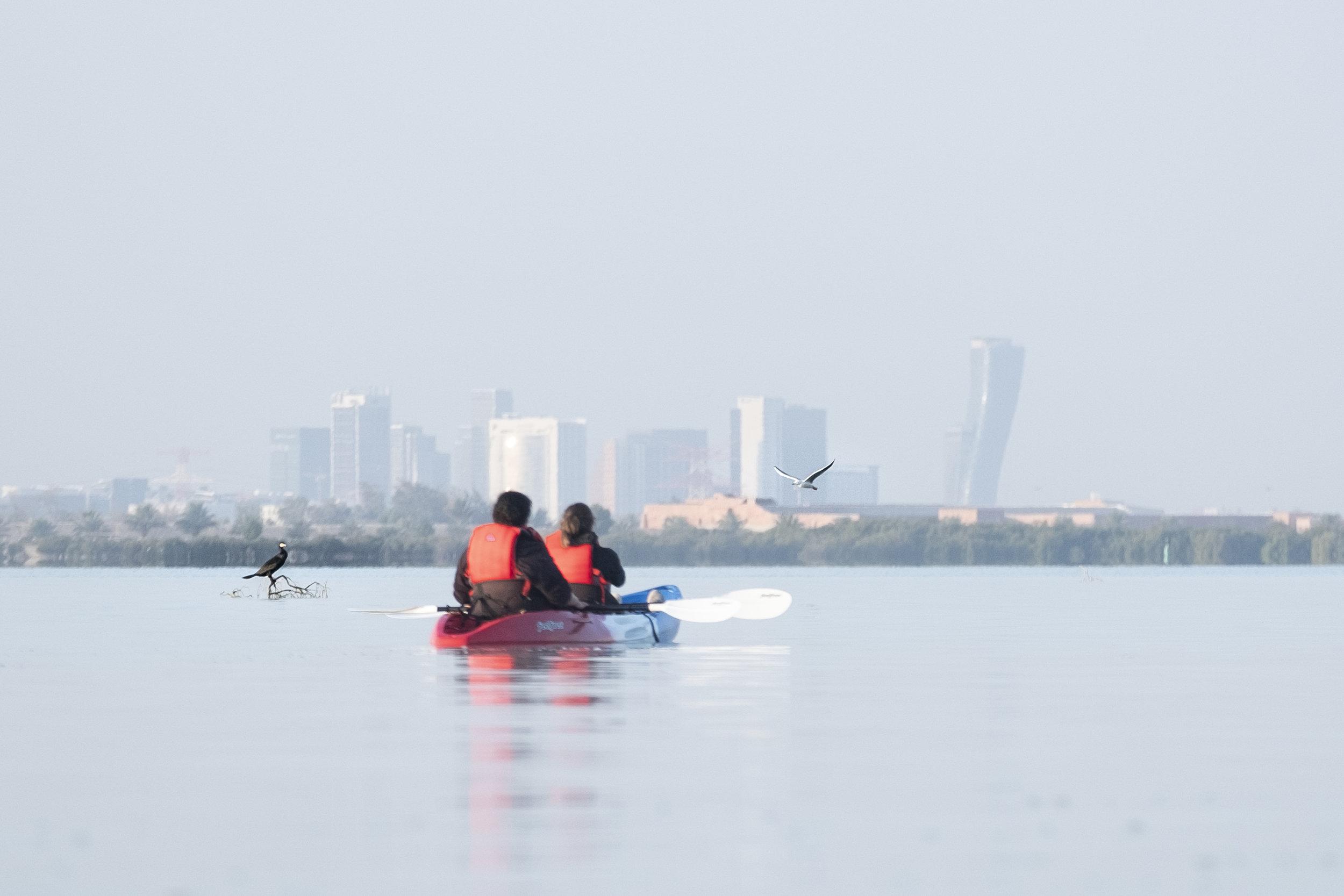 Kayaking Western Reef Heron (Egretta Gularis)4_Abu Dhabi_(c)Oliver Wheeldon.jpg